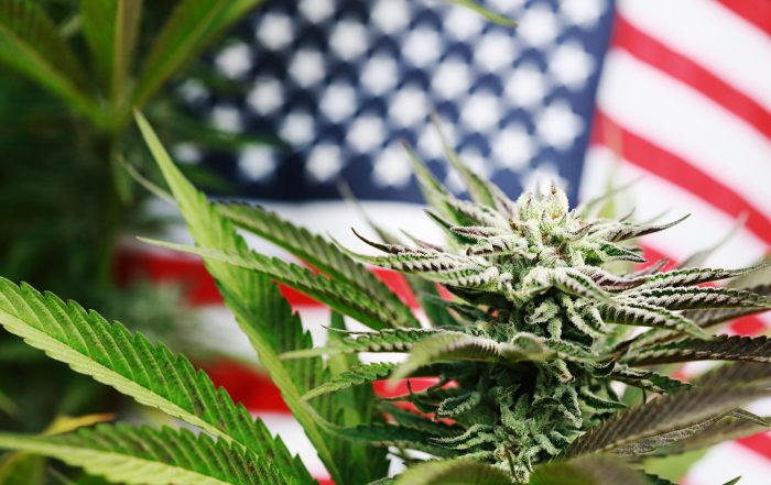 Cannabis plant with American flag